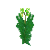 Water Canna Age1.png