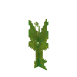 Water Canna Age3.png